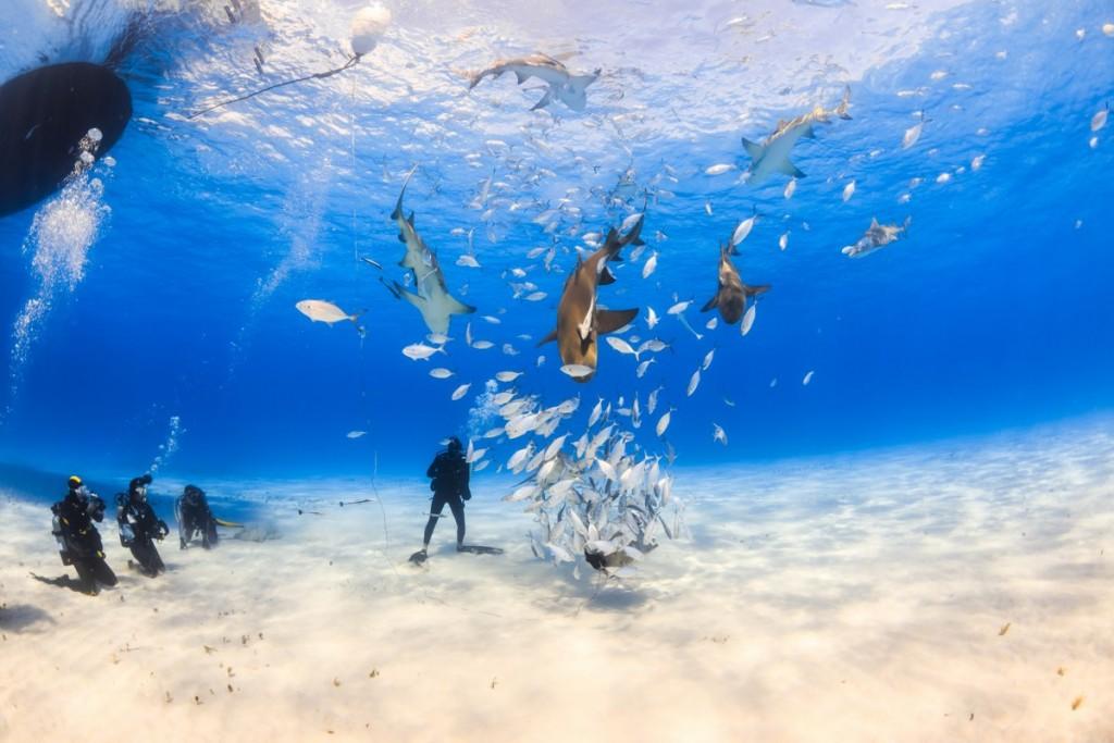 Bucear en Paradise Island