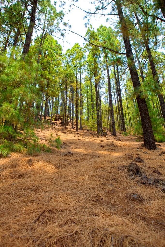 The Corona Forestal Nature Park