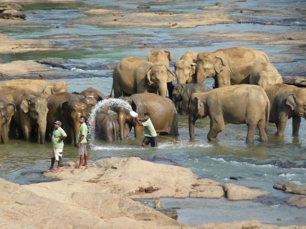 foto-13-_-elefanten-im-park-copiar