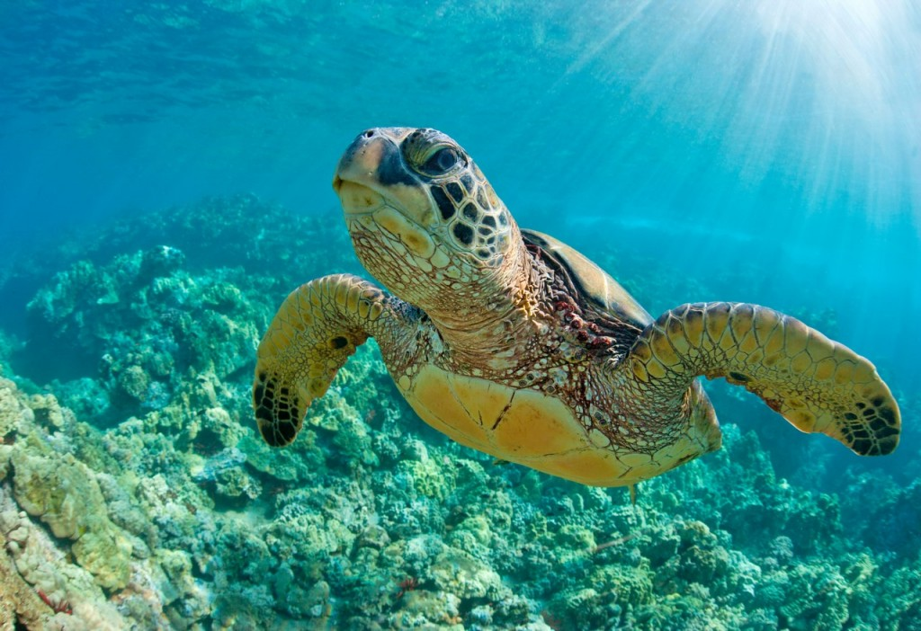 tortuga-marina-copiar