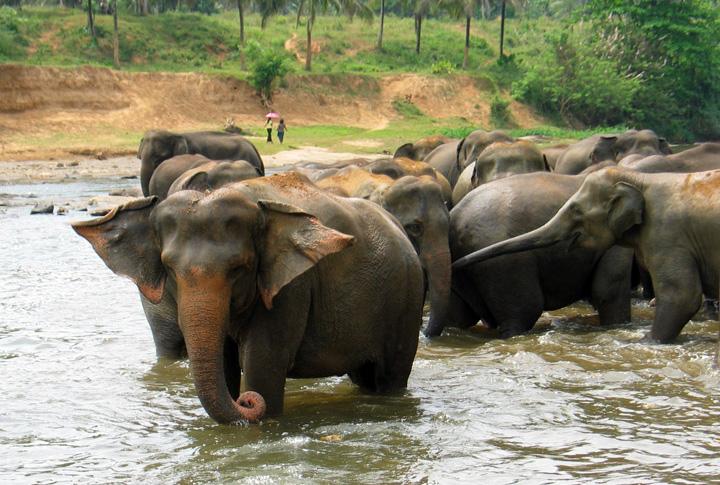 07 Badende Elefanten