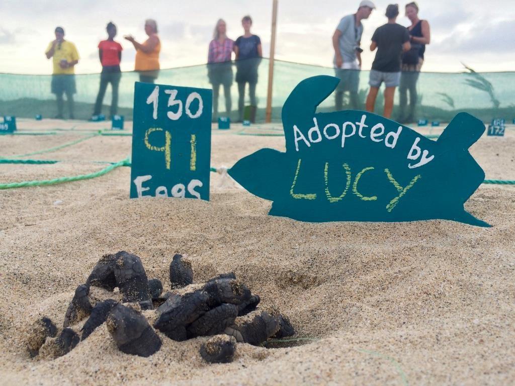 Tortugas adoptadas por nuestros huéspedes