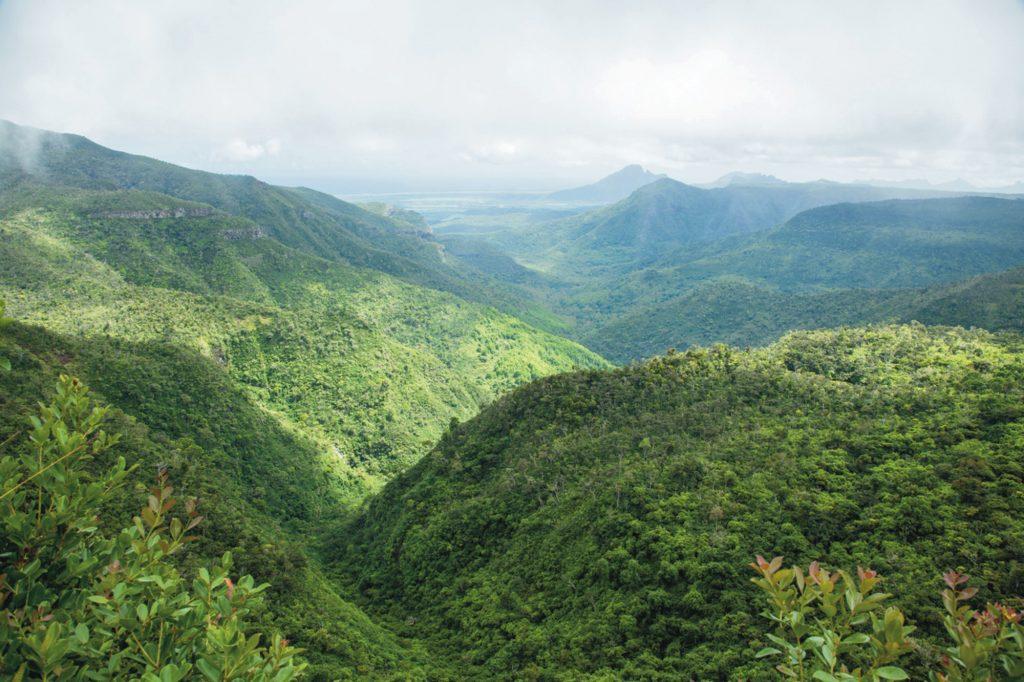 Paisaje verde Mauricio