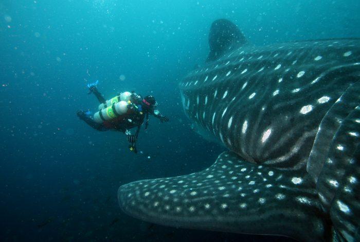 Las Maldivas son perfectas para los amantes de los deportes acuáticos