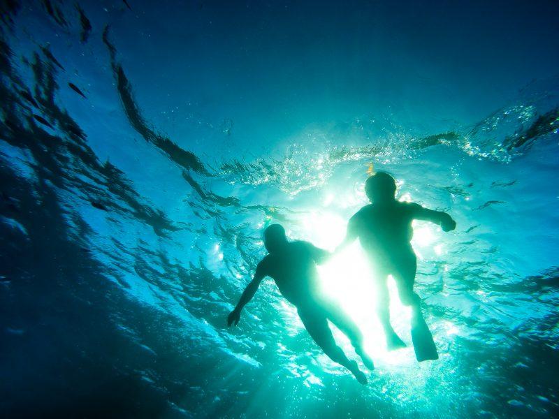 Entdecken Sie mit RIU die Meeresbewohner von Punta Cana