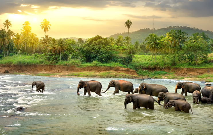 The Sri Lankan landscape will not fail to amaze you