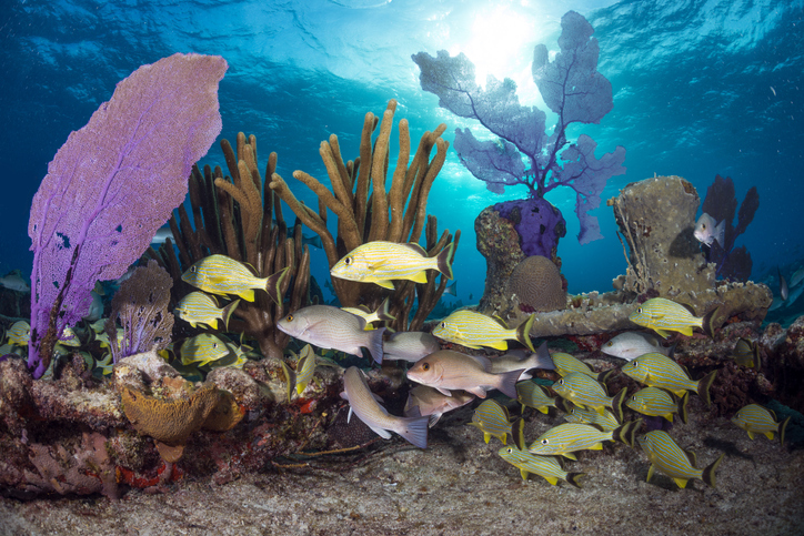 Dive in the magical reefs of the Bahamas