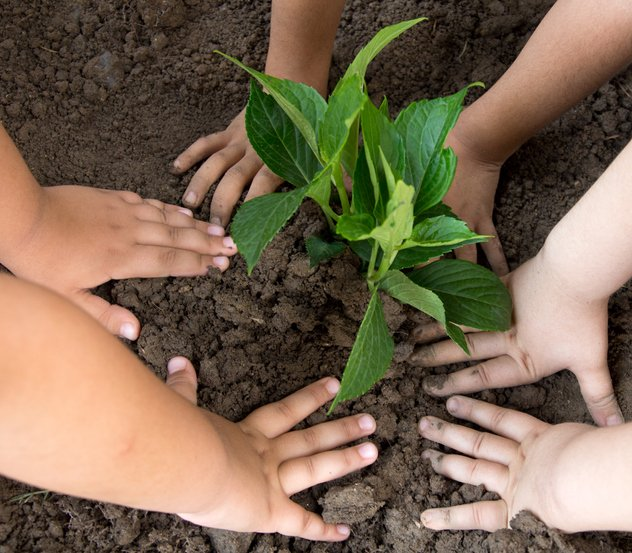 One of the measures within RIU and Ayuda en Acción's projects are the school gardens