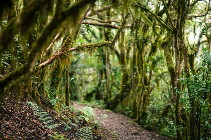 Besuchen sie mit RIU den Landschaftspark Parque Rural de Anaga