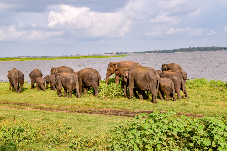 In Sri Lanka you can go on a safari in the Udawalawe National Park