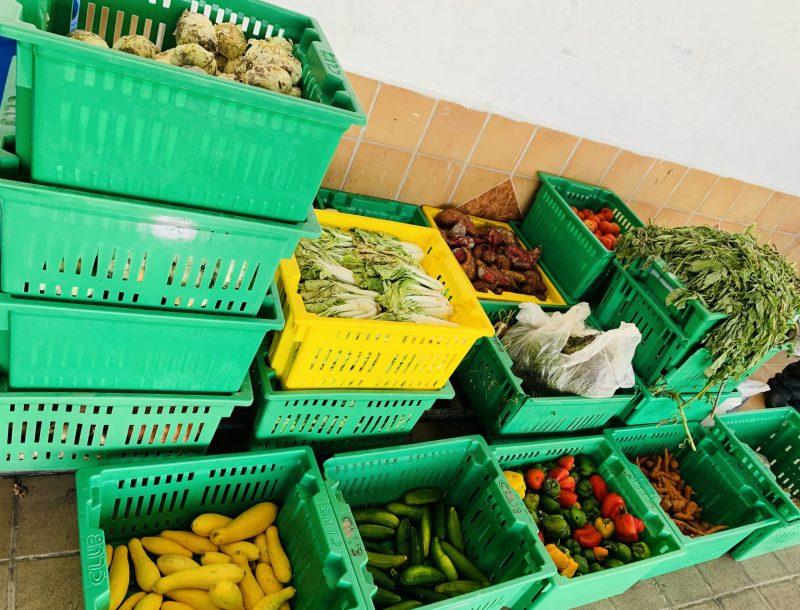Obst und Gemüse von Mitarbeitern des Hotels Riu Negril in Jamaika an Hilfsorganisationen gespendet