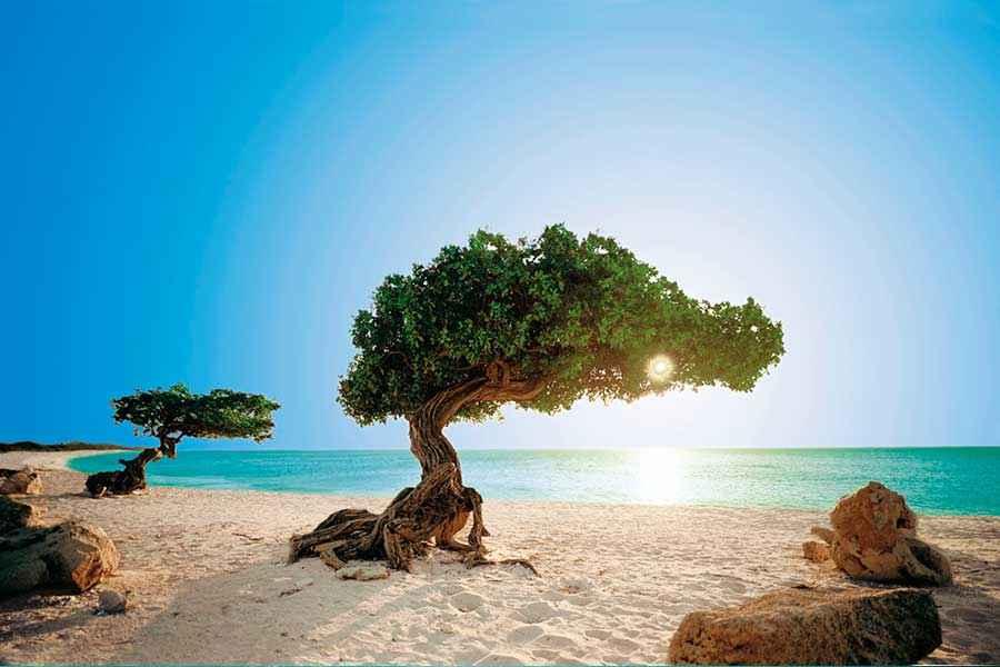 Dreams Playa Mujeres Golf amp Spa Resort  Apple Vacations