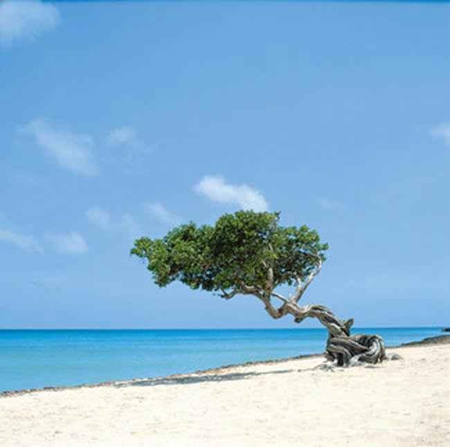 Palm Beach Aruba Hotels RIU