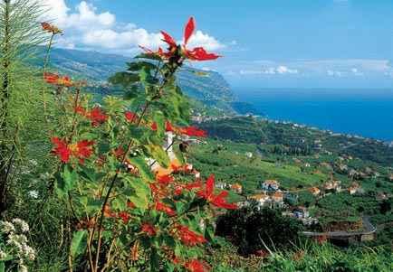 Vacaciones Cani 231 O De Baixo Madeira Todo Incluido